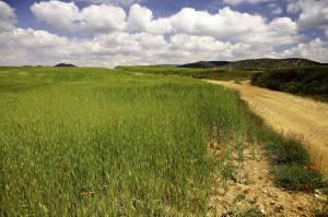 Comunidad de Teruel. Aguatón. Campos de cultivos cerealistas.