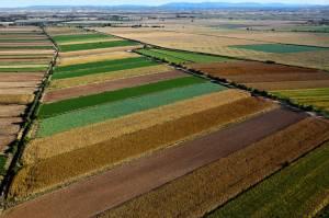Campos de cultivo, Ejea de los Caballeros