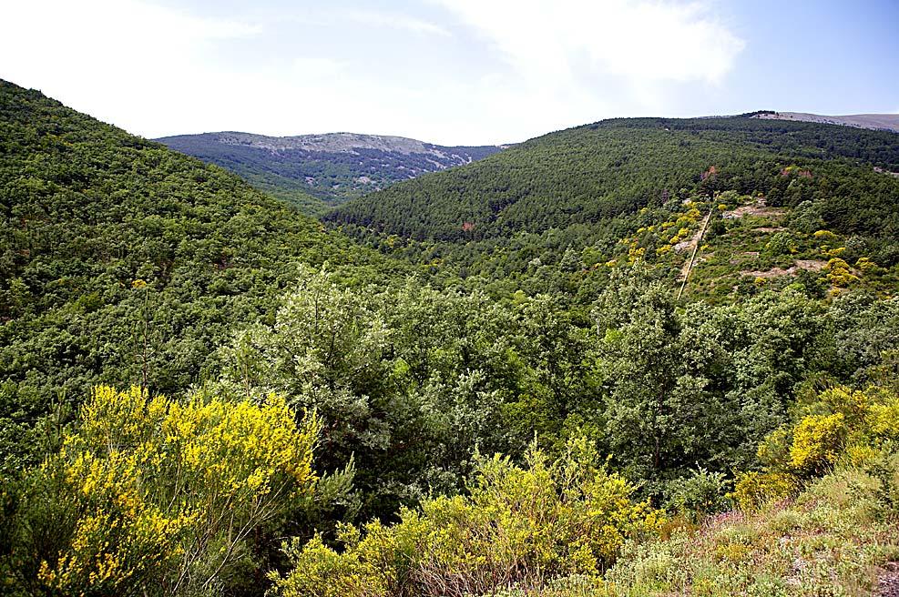Parque Natural del Moncayo, dehesa del Raso (Añón del Moncayo).