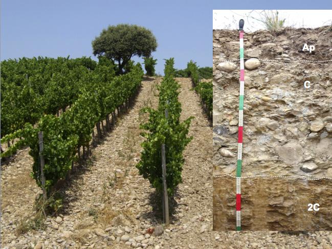 Viñedo de Viñas del Vero en Secastilla y perfil de suelo (imagen: EPS de Huesca).