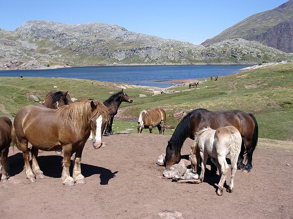 Manadas de caballos pastan junto al ibón de Estanés (foto: David Saz).
