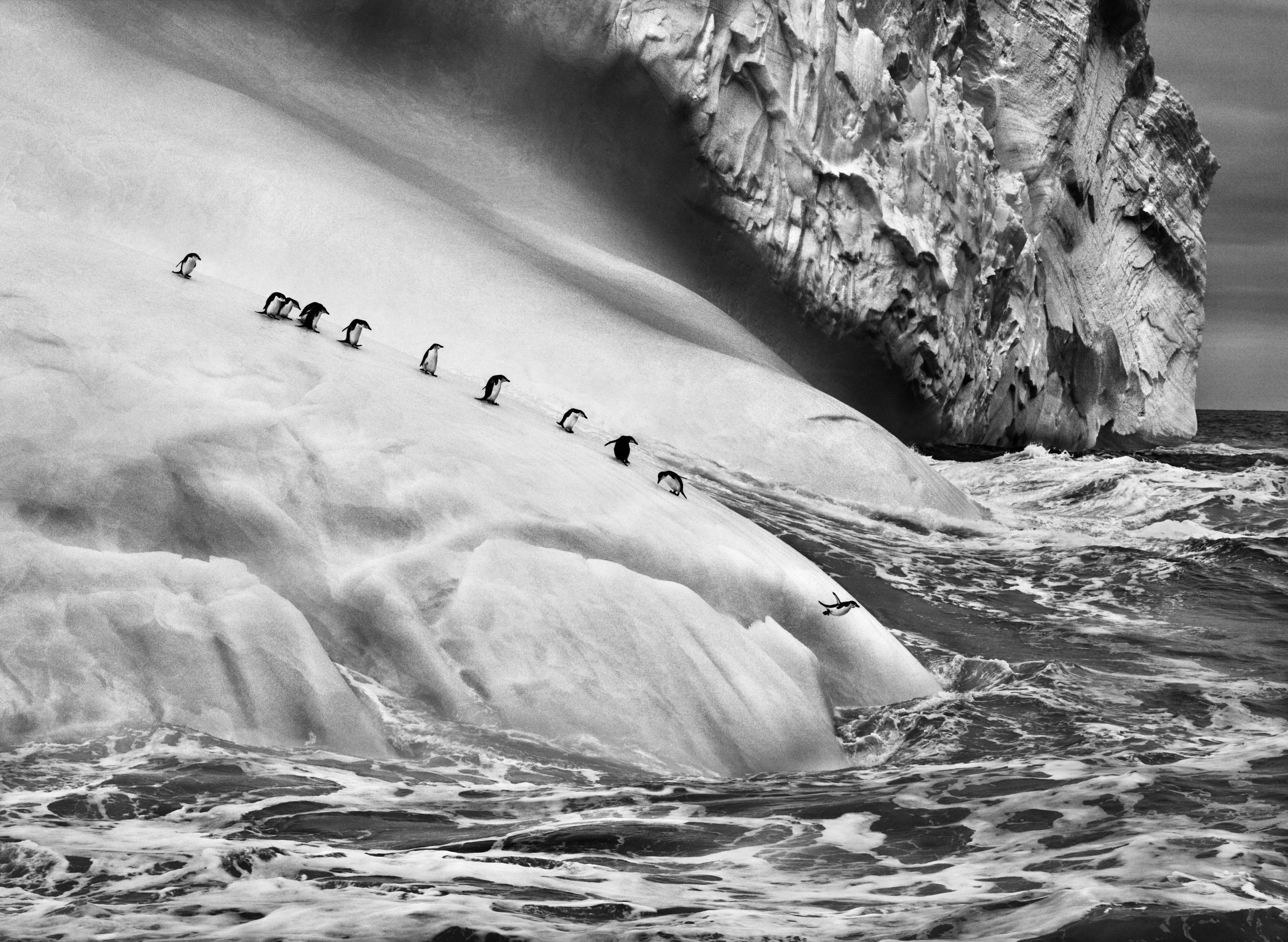 Pingüinos barbijos-Genesis-Salgado