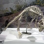 Esqueleto completo del Psittacosaurus mongoliensis.