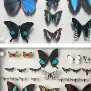 Colección de mariposas (MCN-Unizar).