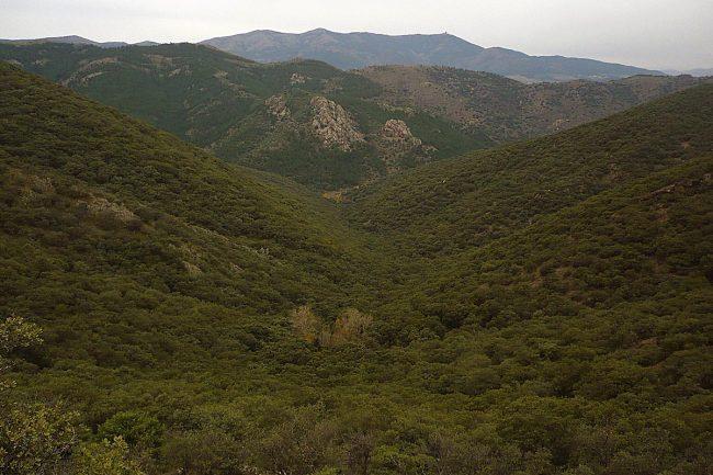 sierra de Algairén, ruta del bosque de Mosomeros.