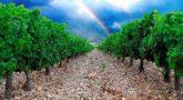 Fiesta de la Vendimia y Ruta del Vino de las Piedras en Cariñena