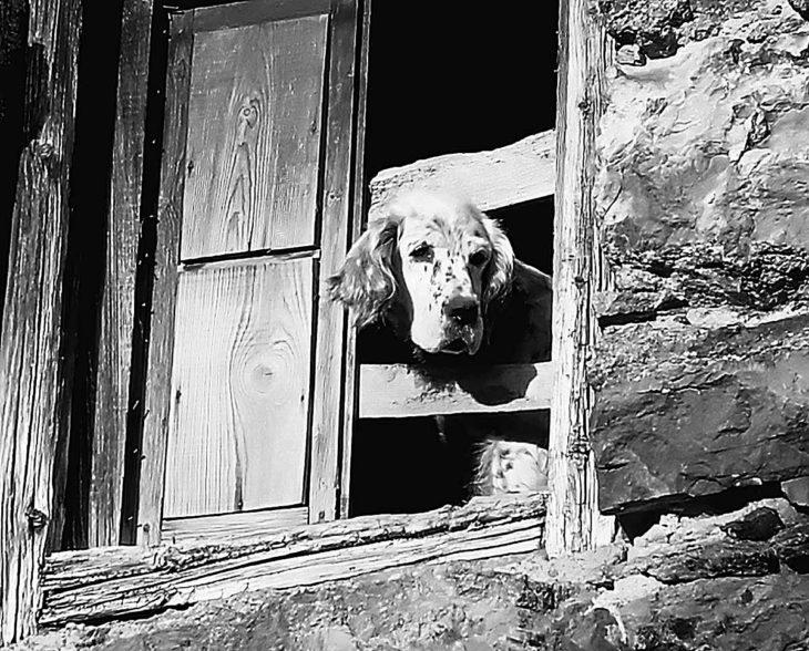 Perro, Celtiberia Literaria